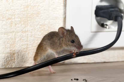 Pest Control in Molesey, East Molesey, West Molesey, KT8. Call Now! 020 8166 9746
