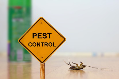 Pest Contol in Molesey, East Molesey, West Molesey, KT8. Call Now 020 8166 9746